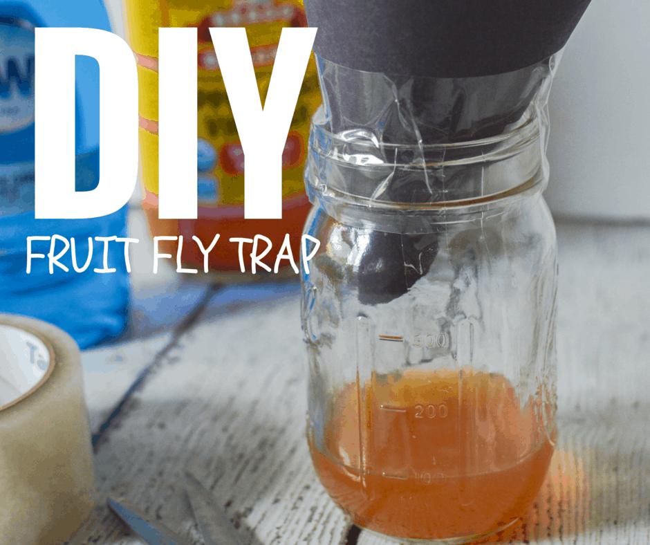 DIY Fruit Fly Trap - The Natural Nurturer